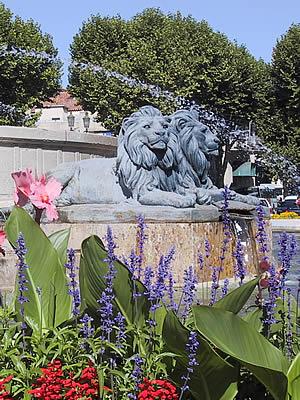 fleurs photo lions et fontaine aix en provence photos d 39 aix en provence. Black Bedroom Furniture Sets. Home Design Ideas