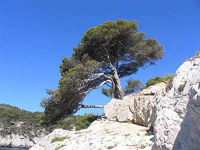 Arbre et calanques photo vacances provence - Arbre provencal ...