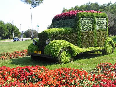Photos fleurs - Provence