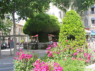 Ville de salon de provence photo fontaine moussue for Bibliotheque salon de provence